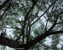 Pépinière Michel - Rivesaltes - Une vue générale de la pépinière