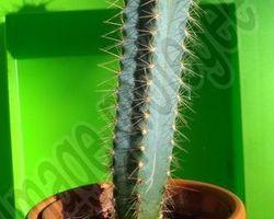 Pépinière Michel - Rivesaltes - Les cactus