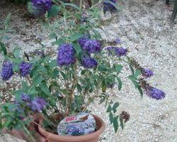 Pépinière Michel - Rivesaltes - Aperçu divers végétaux de la pépiniére