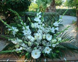 Pépinière Michel - Rivesaltes - Mariage Blanc Pur