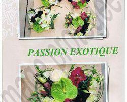 Pépinière Michel - Rivesaltes - Passion exotique