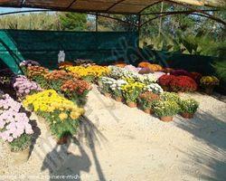 Pépinière Michel - Rivesaltes - Décoration florale et création d'espaces verts en images