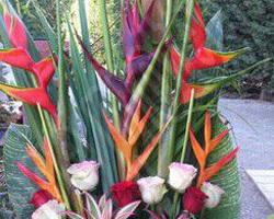 Pépinière Michel - Rivesaltes - Bouquets exotique